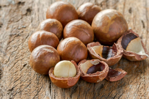 Macadamia nut highly nutritious